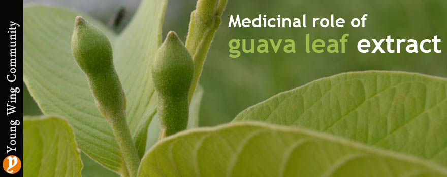 Medicinal role of guava leaf extract