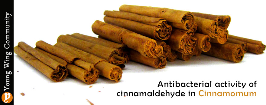 Antibacterial activity of cinnamaldehyde in Cinnamomum