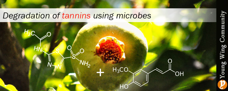 Degradation of tannins using microbes